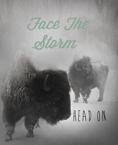 Innii (Buffalo)    The great Buffalo teaches us to be strong and to face the storms of life head on. The Buffalo know that the quickest way to get through a storm is to face it and not run away.  As we make our way out of the winter and into the spring, it is a time to look at how we may be of service to our communities. How may we give of ourselves?     Share the medicine of Buffalo with your friends and family. The Buffalo look out for their own.   www.aynihealth.com