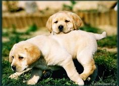 Baby labs