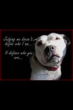 Pitbulls. RIGHT! Stop judging...