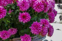 flowers, bloemen