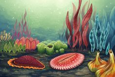 For ages, life on Earth and its origin has been a big fascination for mankind. The ancestry of most animals can be traced back to 541 million years ago – when an event called the Cambrian Explosion abruptly birthed a myriad of familiar creatures in the sea. It was a time when the ancestors of crabs, clams, and jellyfishes dominated the oceans. Little did people know, there was a time before the Cambrian where life looked like nothing that exists today.
