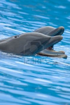 #dolphins #cute #animals