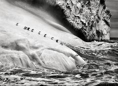 Pinguins em icebergs entre Zavodovski e Visokoi nas Ilhas Sandwich do Sul, perto da Antártida (2009)