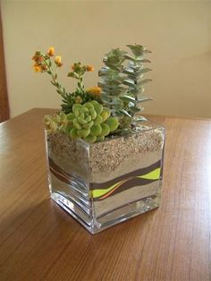 39 DIY Sand Art Terrarium Ideas & Projects Everyone Will Love Succulents In Containers, Cacti And Succulents, Planting Succulents, Planting Flowers, Terrarium Containers, Succulent Display, Succulent Centerpieces, Succulent Arrangements, Mini Terrarium