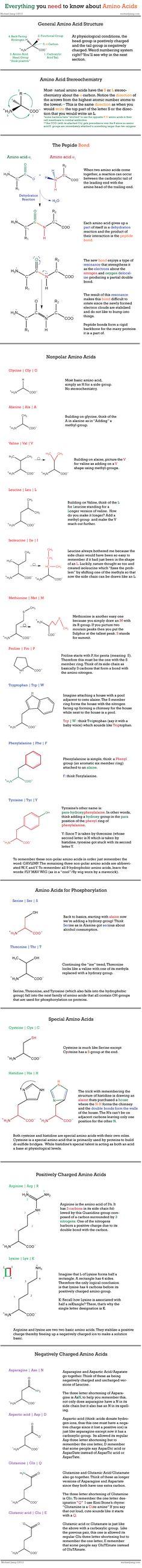 Amino Acids. Biochem!