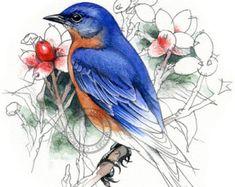 Lark Bunting watercolour bird wildlife art by RobManciniImages