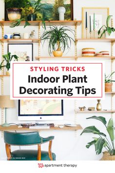 Plants add color, shape and life to a room and for that alone we love them. But they are also surprisingly versatile and — like artwork, furniture, and other decor — are a powerful tool in your design arsenal. Use them as a major feature of the room, a last minute styling detail, and so much more.