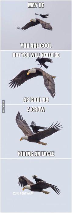 A crow riding an eagle und wie Photoshop sich an die Macht kraulte...Kreativität an die Macht!!!