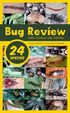 "Pests bugging you and your plants? Check out ""The Bug Review"" from the University of Illinois Extension."