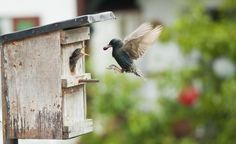 Hang up nesting boxes for birds in the garden ,