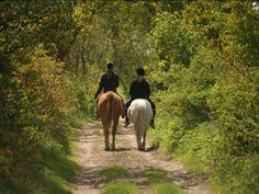 Horse Portrait, Stock Foto, Horses, Couple Photos, Animals, Portraits, Blog, Pictures, Athlete