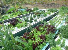 An example of the incredible variety of produce you can grow with our aquaponics system designs.