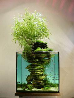 écosystème domestique, biosphère, écosculpture, maison ou ferme : un aquarium presque en écosystème: une écoscupture de Paul Louis DURANTON... une île volcanique par exemple, mêlant l'horticulture, l'aquariophilie, le bonsaï. L'objet est une symbiose entre la végétation terrestre et la faune aquatique