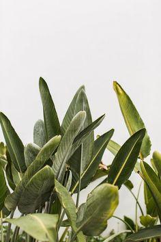 Plantas Hiperrealismo