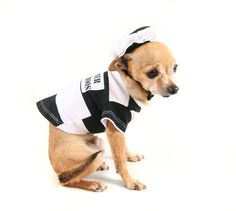 When pet sitters go bad: Educating local pet owners via @Pet Sitters International (PSI) (Pet Sitters International)