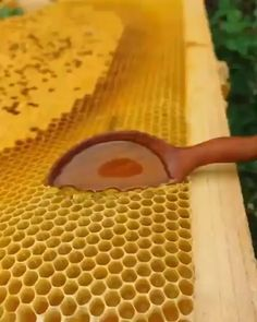 Hiking Discover Honey Of of insta! Satisfying Pictures, Oddly Satisfying Videos, Satisfying Things, Slime And Squishy, Wow Video, Cake Decorating Videos, Asmr Video, Creations, Cool Stuff