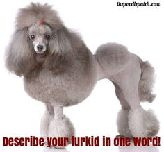 DESCRIBE YOUR FURKID IN ONE WORD!!!