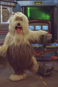 #ValeRever – TV COLOSSO Quando o programa Xou da Xuxa encerrou em 1992 a Rede Globo procurou uma atração que suprisse as expectativas do público infantil e no dia 19 de abril de 1993 entrava no ar o TV Colosso, mostrando num ambiente televisivo, os cachorros que viviam a correria diária de colocar a programação de sua TV canina no ar. Quem se lembra?