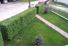 Stepping Stones, Sidewalk, Outdoor Decor, Garden, Home Decor, Walkway, Homemade Home Decor, Garten, Lawn And Garden