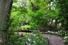 You can see this homeowner lets the Hosta flower. Notice in this image how cut logs are used edge the path.