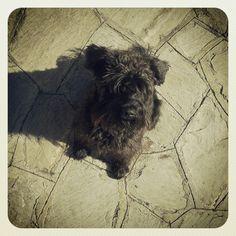 a Nina me espera em casa todo dia, feliz da vida :)