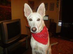 Jacks sporting his red bandana