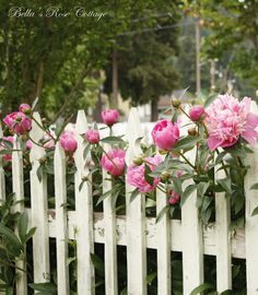 Bella's Rose Cottage: A Rainy Day along the Picket Fence. Garden Fencing, Lawn And Garden, Pink Roses, Pink Flowers, White Picket Fence, Picket Fences, Flower Fence, Garden Angels, Garden Borders
