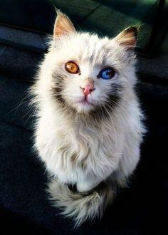 Interesting... Beautiful Cats Videos Youtube xx