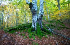 Apuntes para la gestión forestal desde una perspectiva humanista Plants, Spain, Perspective, Forests, People, Drawings, Management, Sevilla Spain, Plant