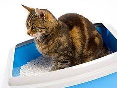 Un parásito transmitido por los gatos puede enloquecerte a ti y a tu hijo o dejarlos ciegos