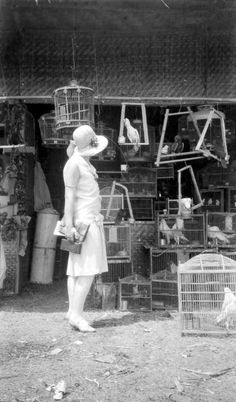 Bird market Batavia (now Jakarta) Indonesia Pictures Of People, Old Pictures, Old Photos, Vintage Photos, The Caged Bird Sings, East India Company, Dutch East Indies, Dutch Colonial, Ad Art