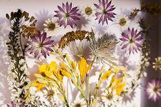 Cách làm tranh hoa khô cực ảo diệu theo phong cách 3D - Ảnh 9.