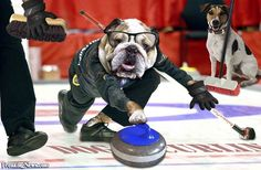 Dog's Curling World Cup