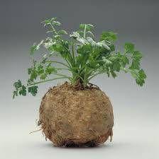 Aardappelpuree Met Knolselderij recept | Smulweb.nl