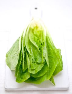 Lettuce by Barbara Toselli Photography