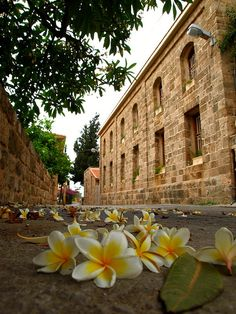 by Kevin.Donegan on Flickr.  Backstreets in the old city of Byblos, Lebanon. Couldn't resist the Plumeria strewn in the foreground