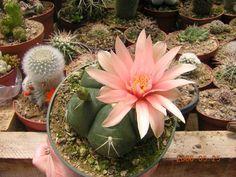 cactus-costa-rica (05).jpg