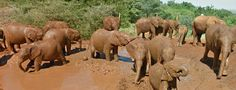 CHECK THIS OUT! IT'S INCREDIBLE!  Go on a  virtual tour of The David Sheldrick Wildlife Trust​ Elephant orphanage