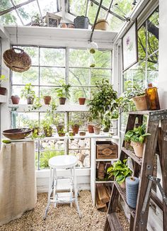 The Backyard Greenhouse Trend Is Here To Stay,And Gardeners Are Gettingmore Creative Than Ever. Investigate This Family's Mini Greenhouse Madefrom Antiqueglass Windows That They Built For Cheap Greenhouse, Backyard Greenhouse, Mini Greenhouse, Greenhouse Plans, Homemade Greenhouse, Greenhouse Farming, Underground Greenhouse, Greenhouse Growing, Greenhouse Wedding
