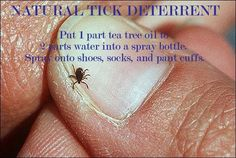 Natural Tick Deterrent: 1 part tea tree oil to 2 parts water. Spray shoes, socks, and pant cuffs