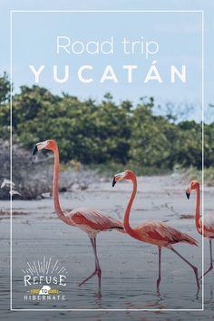 Refuse to hibernate road trip Yucatan Belize Travel, Mexico Travel, Merida, Travel Photographie, Mexico Destinations, Solo Travel Tips, International Travel Tips, Travel Rewards, Visit Mexico