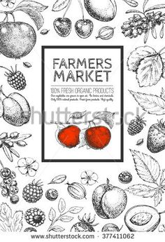Food design template. Vintage logo, fruits and berries. Hand drawn vector illustration. Farmers market. Style of etching. Layout. Sketch.
