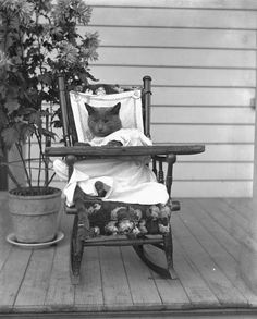 "Those Krueger children are at it again. ""Jennie and Edgar Krueger's cat Tramp, dressed up in old boys' clothes and sitting in a rocking chair,"" ca. 1905. Source: Wisconsin Historical Society."