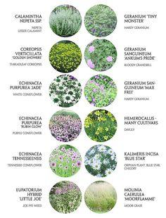 Food For Psoriasis Treatment Meadow Garden, Cottage Garden Plants, Garden Design Plans, Landscaping Plants, Day Lilies, Plant Design, Garden Planning, Garden Inspiration, Beautiful Gardens
