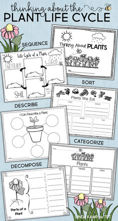 Life Cycle of Plants Unit, Investigations &. by Linda Kamp - Add these fun graphic organizers to your plant life cycle activities to get your class thinking! Use them to have students sequence sort describe categorize and decompose the stages and parts Science Experiments Kids, Science Lessons, Science Activities, Life Science, Sequencing Activities, Science Books, Elementary Science, Plant Life Cycle Worksheet, Plant Lessons