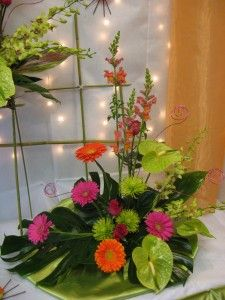 Jamies tropical arrangements