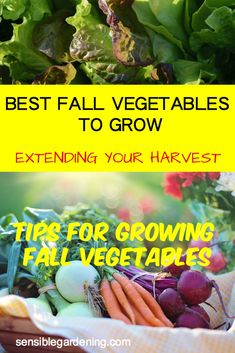 How to extend your garden season. Tips for growing fall vegetables. Which vegetables work best.