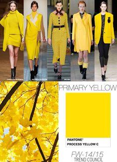 Pantone / Yellow / FW 2015