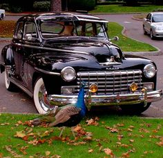 "My very own 1947 Dodge Deluxe...""Truman"""