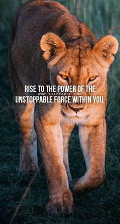 Rise to the power of the unstoppable force within you. – Rise to the power of the unstoppable force within you. Rise to the power of the unstoppable force within you. Motivational Wallpaper, Wallpaper Quotes, Bible Verses Quotes, Words Quotes, Life Motivation, Fitness Motivation, Fitness Workouts, Fitness Life, Lioness Quotes